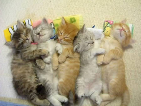 cute-kittens-nap-together