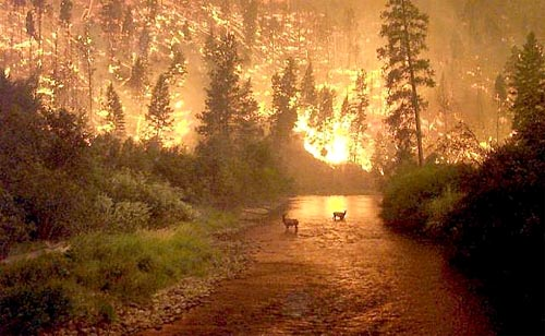 forest-fire