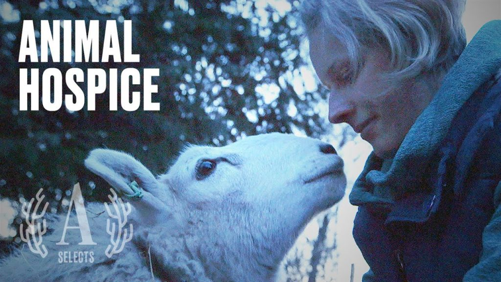 No Animal Should Have To Die Alone